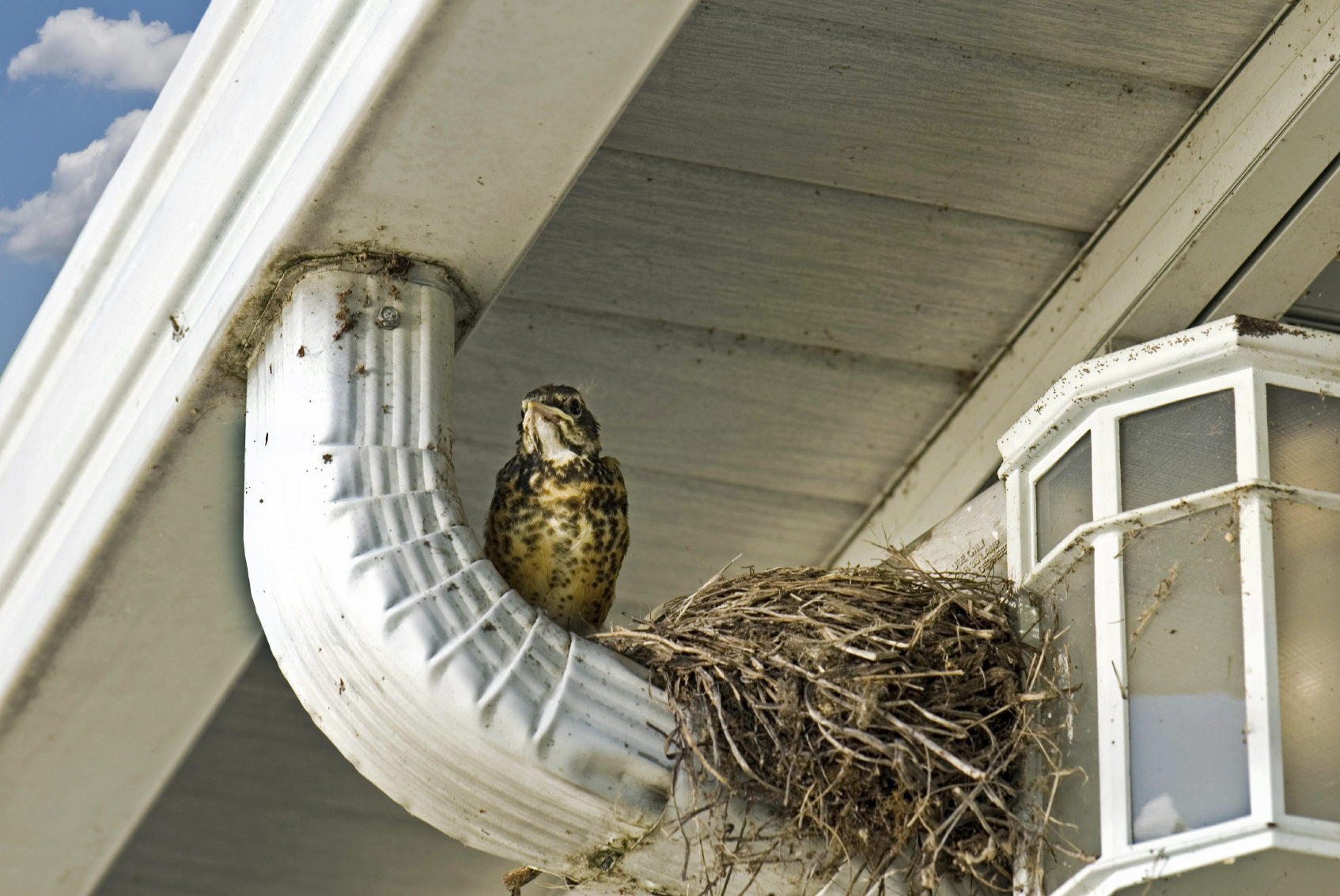 How To Keep Birds From Nesting In Gutters New Vision